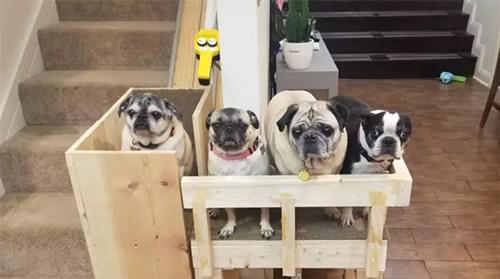 Dogilike.com :: เจ้าของอยู่บ้านนาน ปิ๊งไอเดียทำลิฟต์ให้ตูบสูงวัยขึ้นบ้านง่ายขึ้น!