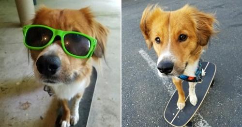 Dogilike.com :: ลีลาเด็ด! เจ้าตูบอัพสกิลฝึกเล่นสเก็ตบอร์ดช่วงล็อคดาวน์ (มีคลิป)