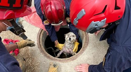 Dogilike.com :: ตูบติดในท่อระบายน้ำ 3 วัน ทีมนักดับเพลิงเร่งช่วยจนปลอดภัย!