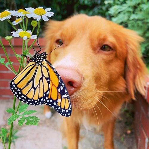 Dogilike.com :: แจกความสดใส! เจ้า Milo ตูบใจดีที่ขนาดผีเสื้อยังขอมาเป็นเพื่อนด้วย