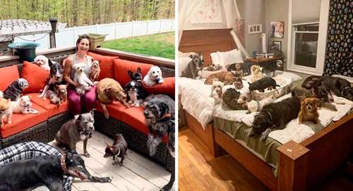 Dogilike.com :: ชื่นชม! คู่รักเปลี่ยนบ้านเป็นที่พักพิงฯ ดูแลสุนัขสูงวัยและสุนัขพิการ