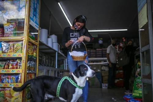 Dogilike.com :: เจ้า Nino ตูบผู้คาบตะกร้าไปซื้อของแทนเจ้าของช่วงโควิด-19