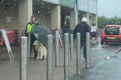 Dogilike.com :: เห็นแล้วยิ้ม! รปภ.หนุ่มกางร่มให้โกลเด้นฯแปลกหน้าในวันฝนตก