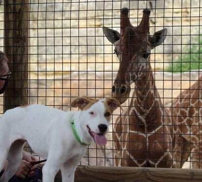 Dogilike.com :: แก๊งหมาแมวบุกทัศนศึกษาที่สวนสัตว์ โชว์ความน่ารักกระตุ้นรับเลี้ยง!