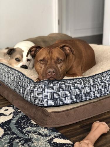Dogilike.com :: วงจรปิดเผยมุมน่ารักเมื่อ 2 เจ้าตูบช่วยดูแลกันในยามป่วย! (คลิป)