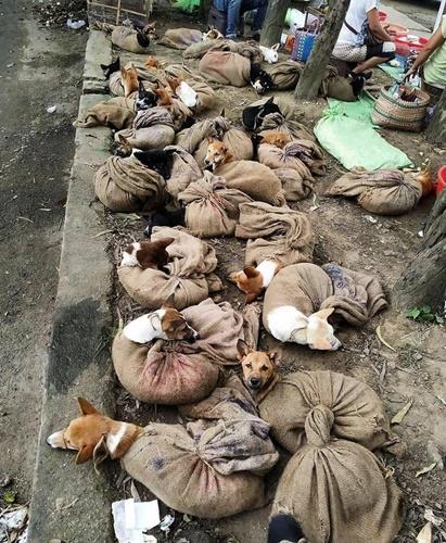 Dogilike.com :: วิจารณ์เดือด! พบลักลอบขนสุนัขนำไปขายกินเนื้อในอินเดีย