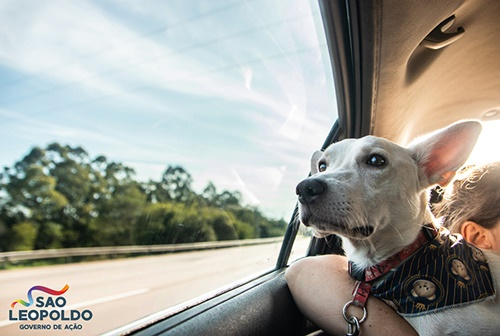 Dogilike.com :: TinTin หมาขาพิการถูกเจ้าของทอดทิ้ง วันนี้ได้บ้านใหม่แล้ว!