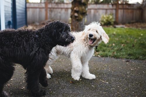 Dogilike.com :: จัดอันดับ 5 ข้อดีต่อสุขภาพที่คนเลี้ยงหมาแมวเท่านั้นจะได้รับ