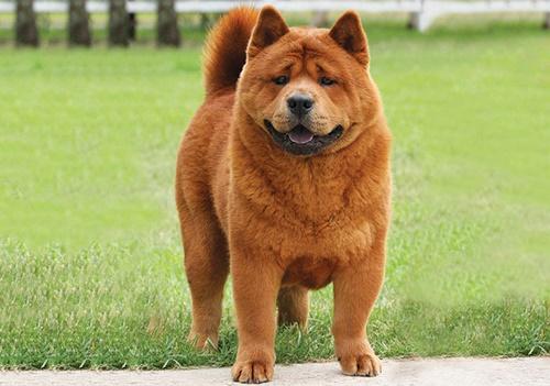 Dogilike.com :: จัดอันดับ 5 สายพันธุ์น้องหมาบอดี้การ์ด ปกป้องบ้านได้หายห่วง!!