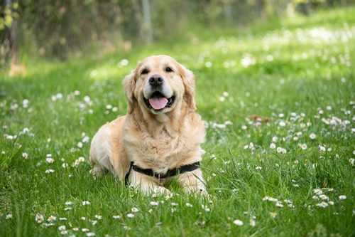 Dogilike.com :: เคล็ด(ไม่)ลับ! เลี้ยงหมาแมวแบบ Eco-Friendly ใคร ๆ ก็ทำได้