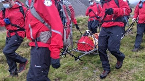 Dogilike.com :: กู้ภัยช่วยชีวิตเซนต์เบอร์นาร์ด หลังตกเขาสูงที่สุดในอังกฤษ!