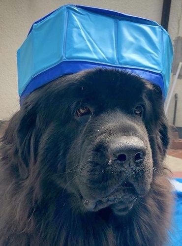 Dogilike.com :: ไม่ตรงปก! เจ้าของสุดขำสั่งสระน้ำให้ตูบผ่านเน็ต เจอของจริงกลับเป็นแบบนี้