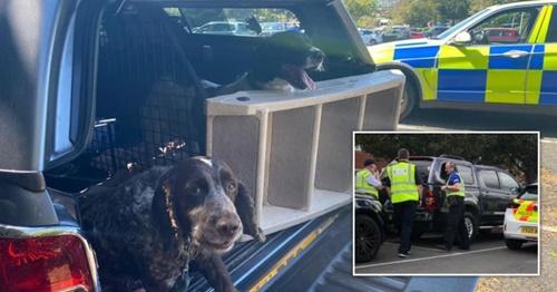 Dogilike.com :: ตำรวจช่วยชีวิต 2 ตูบหลังเจ้าของทิ้งไว้ในรถก่อนเข้าไปเล่นสวนสนุก!
