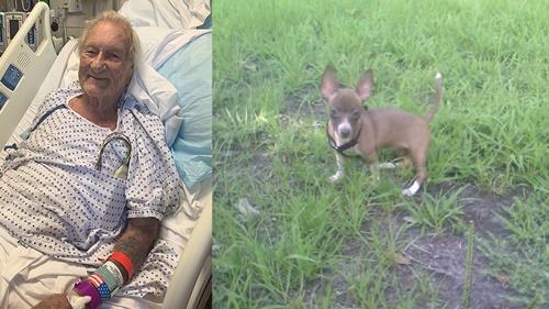 Dogilike.com :: จิ๋วแต่แจ๋ว! ชิวาวาพาคนมาช่วยชีวิตคุณปู่ป่วยโรคหลอดเลือดสมอง