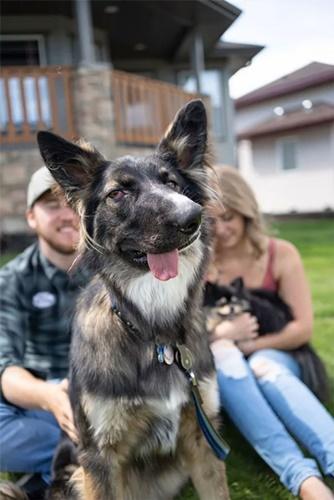 Dogilike.com :: เผยเรื่องราว! เจ้า Brodie ตูบหน้าเบี้ยวว่าที่สุนัขบำบัดของผู้พิการ