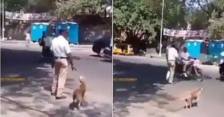 Dogilike.com :: ไวรัลน่ารัก! พี่ตำรวจจราจรช่วยพาเจ้าตูบข้ามถนน ชาวเน็ตแห่ชื่นชม