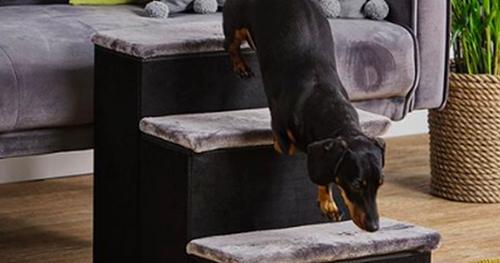 Dogilike.com :: ตูบขาสั้นถูกใจสิ่งนี้! บริษัท Aldi เปิดตัวบันไดช่วยสัตว์เลี้ยงขึ้นโซฟา