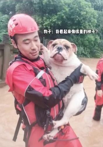 Dogilike.com :: คลิปอบอุ่น! ทีมนักดับเพลิงจีนเข้าช่วยน้องหมา 20 ตัวจากเหตุน้ำท่วม