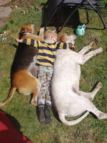 Dogilike.com :: โตมาด้วยกัน! เรื่องราวน่ารักของหนูน้อย 3 ขวบตามติดแก๊งพี่หมา