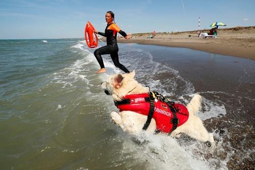 Dogilike.com :: หาดนี้พี่คุม! อิตาลีนำแก๊งตูบเข้าร่วมทีมกู้ภัยช่วยชีวิตคนจมน้ำ