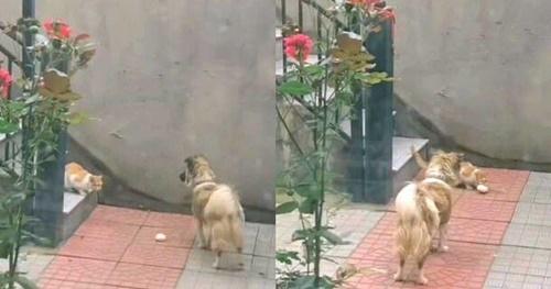 Dogilike.com :: มาสิเราแบ่งให้! เจ้าตูบน่ารักคาบซาลาเปาไปให้แมวไร้บ้าน(มีคลิป)
