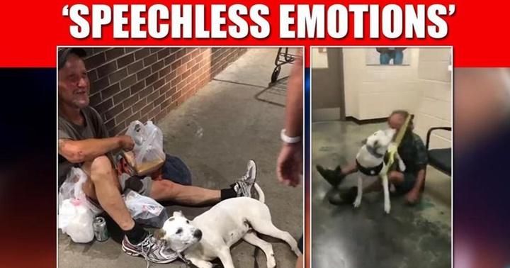Dogilike.com :: อบอุ่นหัวใจ! นาทีชายไร้บ้านโผเข้ากอดตูบสุดรักที่หายตัวไป (มีคลิป)