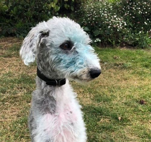 Dogilike.com :: เจ้าของแทบกรี๊ด! ตูบซนเอาตัวกลิ้งบนภาพวาดสีน้ำมันจนเป็นแบบนี้
