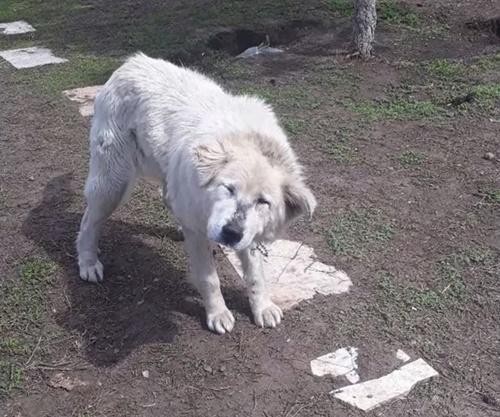 Dogilike.com :: เศร้า! เจ้าของย้ายบ้านใหม่ล่ามโซ่ตูบทิ้งไว้จนร่างกายซูบผอม