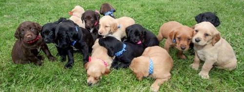 Dogilike.com :: เจ้าของช็อก! สุนัขตกลูก 16 ตัว หลังทำหมันช้าเพราะโควิด-19