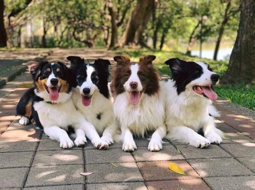 Dogilike.com :: ไวรัลดัง! เจ้าของพาแก๊งตูบไปสวนผลไม้ อดใจไม่ไหวจนเป็นแบบนี้