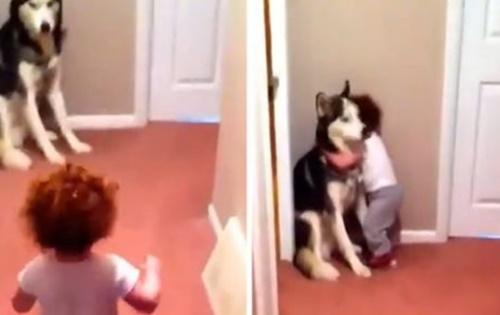 Dogilike.com :: คลิปน่ารัก! หนูน้อยตกใจเสียงเครื่องดูดฝุ่น รีบโผเข้ากอดพี่หมา