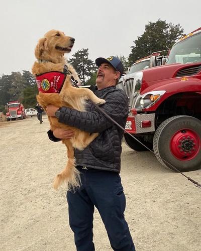 Dogilike.com :: โกลเด้นฯ นักบำบัดคอยแจกกอดให้กำลังใจ จนท.ในเหตุไฟป่าแคลิฟอร์เนีย