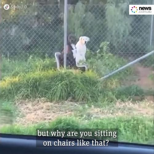 Dogilike.com :: หนุ่มเผยคลิปสุดขำ! บังเอิญเห็น 2 ตูบนั่งบนเก้าอี้คล้ายคนกำลังคุยกัน