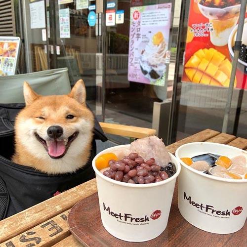 Dogilike.com :: ยิ้มโลกละลาย! เจ้า Uni ชิบะที่มีความสุขทุกครั้งเมื่อเห็นของอร่อย