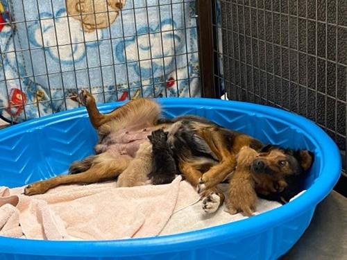 Dogilike.com :: แม่หมาอาสารับเลี้ยงลูกแมว หลังสูญเสียลูกตัวเองไปทั้งครอก!