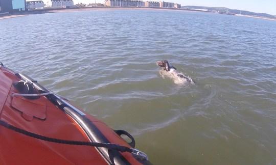Dogilike.com :: จนท.ช่วยชีวิตตูบวิ่งไล่นกนางนวล รู้ตัวอีกทีอยู่กลางทะเลแล้ว !