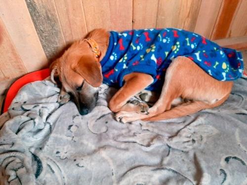 Dogilike.com :: ตูบในเปรูต้องอยู่ลำพัง หลังโควิด-19 พรากชีวิตเจ้าของสุดรัก!