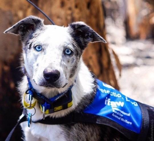 Dogilike.com :: หลากหลายเรื่องราวของน้องหมากับไฟป่าในออสเตรเลีย