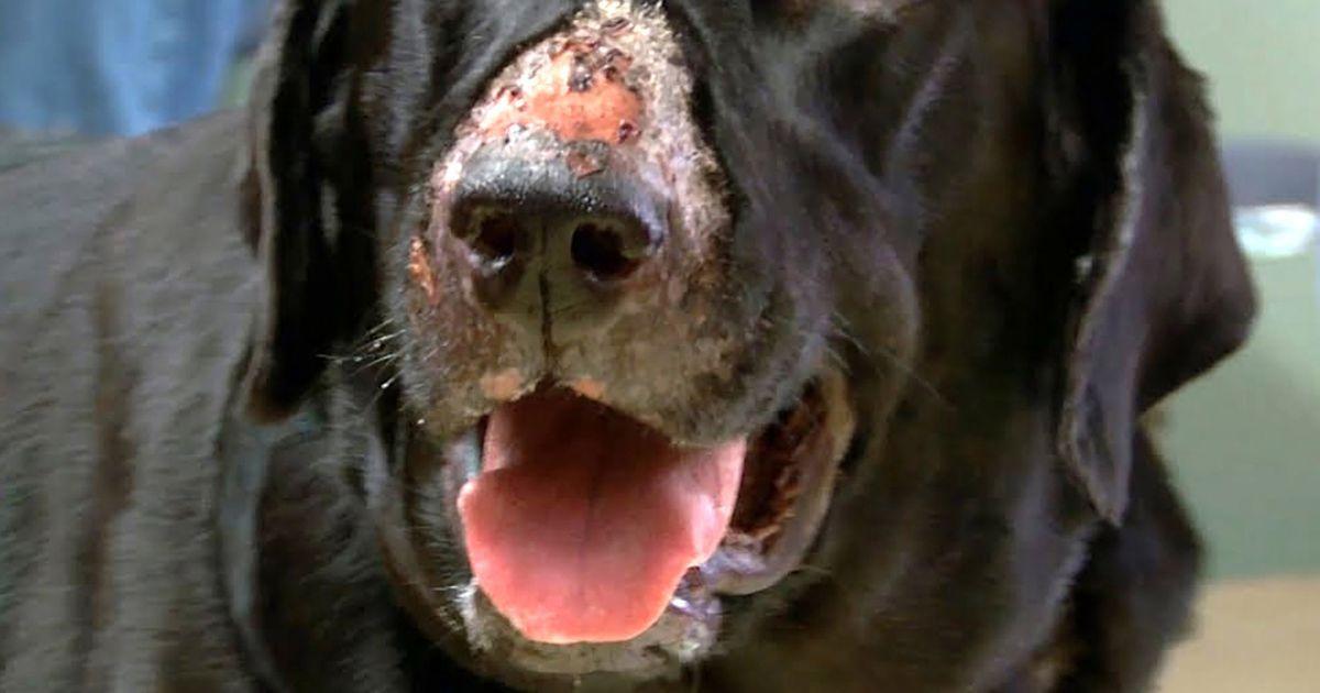 Dogilike.com :: Alabama rot โรคมรณะลึกลับในสุนัข ที่ยังไม่ทราบสาเหตุ