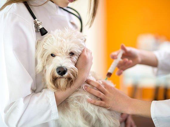 Dogilike.com :: 5 คำถามน่ารู้เรื่องการแพ้วัคซีนในสุนัข