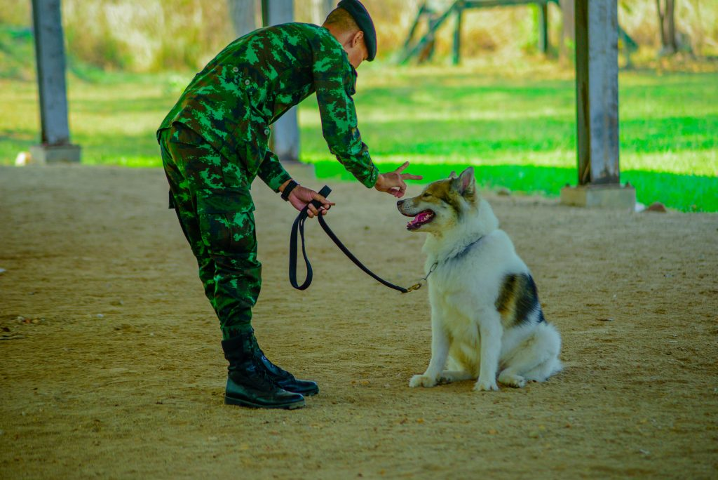 Dogilike.com :: เยี่ยมชมบ้านสุนัขทหาร ของดีเมืองโคราชของคนรักสุนัข