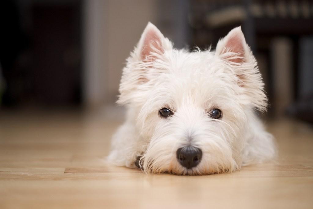 Dogilike.com :: 4 โรคระบาดน่ากลัวในคน สามารถติดน้องหมาได้หรือไม่