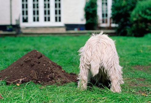 Dogilike.com :: ทำไมไม่ควรฝังสุนัขไว้ที่สวนหลังบ้าน