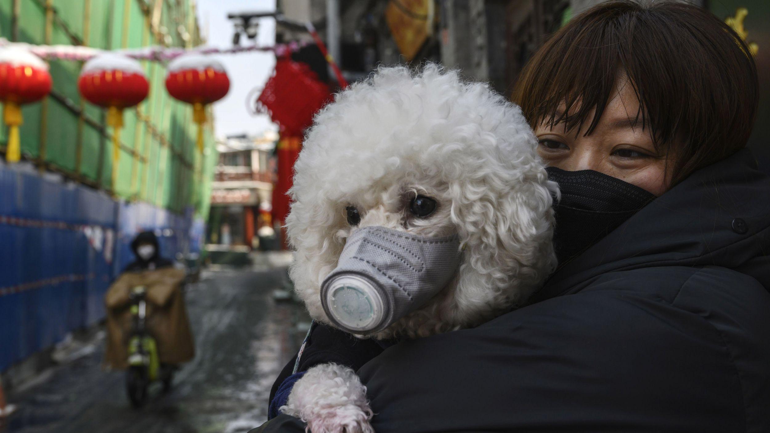 Dogilike.com :: น้องหมาและน้องแมวมีความสามารถรับเชื้อโควิด-19 มากแค่ไหน