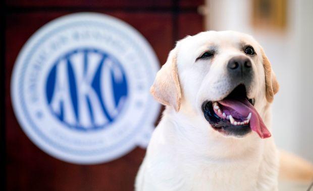 Dogilike.com :: สุนัขพันธุ์อะไรที่คนนิยมเลี้ยงมากที่สุดแห่งปี
