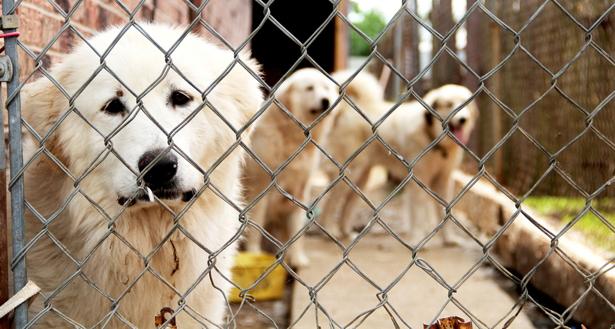 Dogilike.com :: น่าเศร้า!! ชะตากรรมของสุนัขที่เจ้าของเสียชีวิตเพราะโรคโควิด-19
