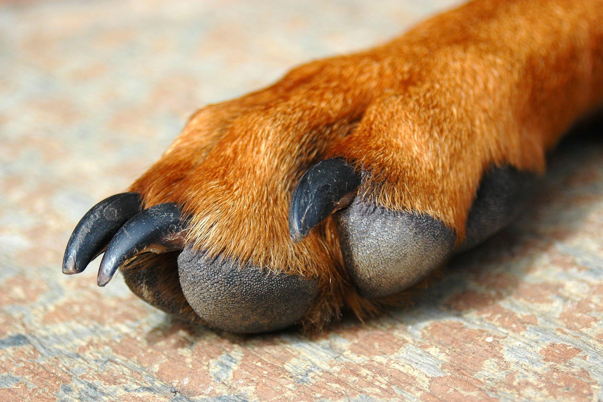 Dogilike.com :: น้องหมาเลียอุ้งเท้าตัวเองเกิดจากการอักเสบ?