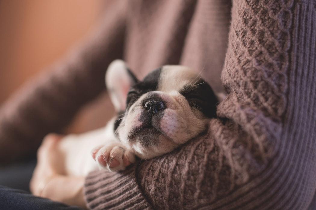 Dogilike.com :: ทำไมสุนัขถึงนอนกรนเสียงดัง