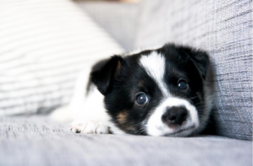 Dogilike.com :: ทำไมสุนัขถึงสะอึก (hiccup) ?