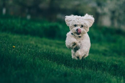 Dogilike.com :: พิชิตโรคข้ออักเสบในสุนัขด้วยสารอาหาร